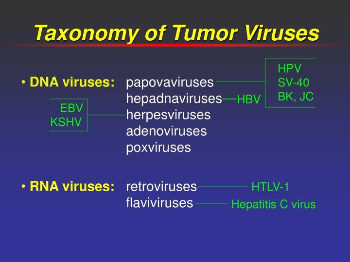 Taxonomy of tumor viruses
