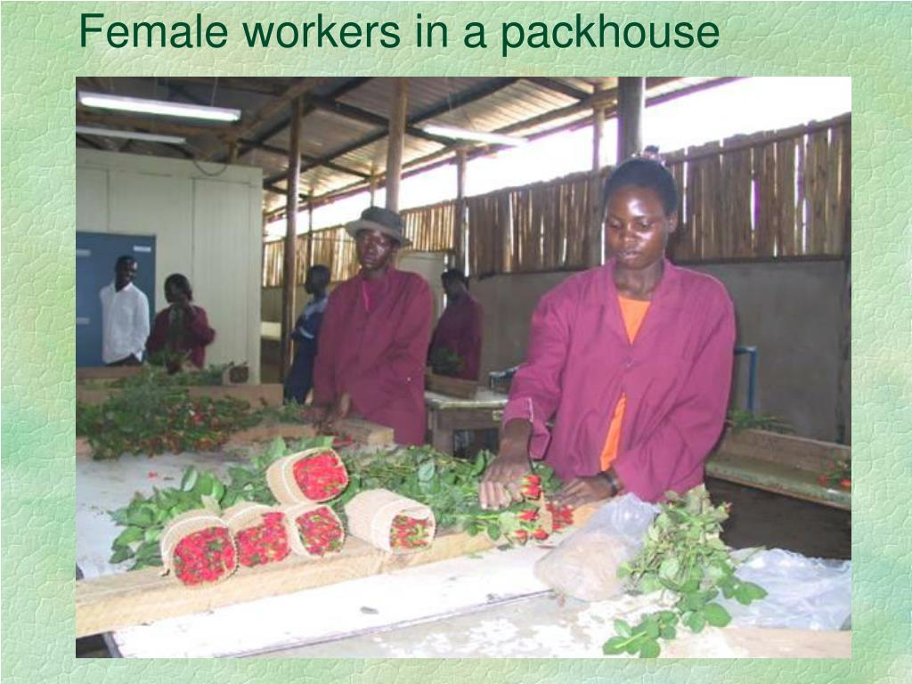Female workers in a packhouse
