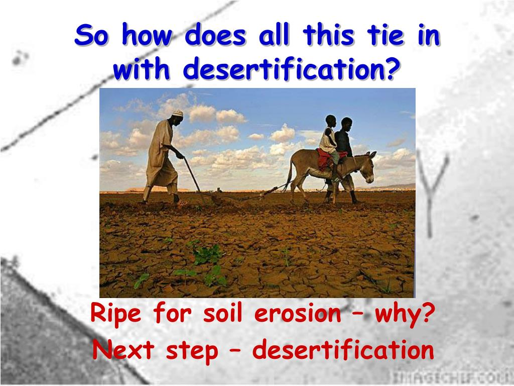 So how does all this tie in with desertification?