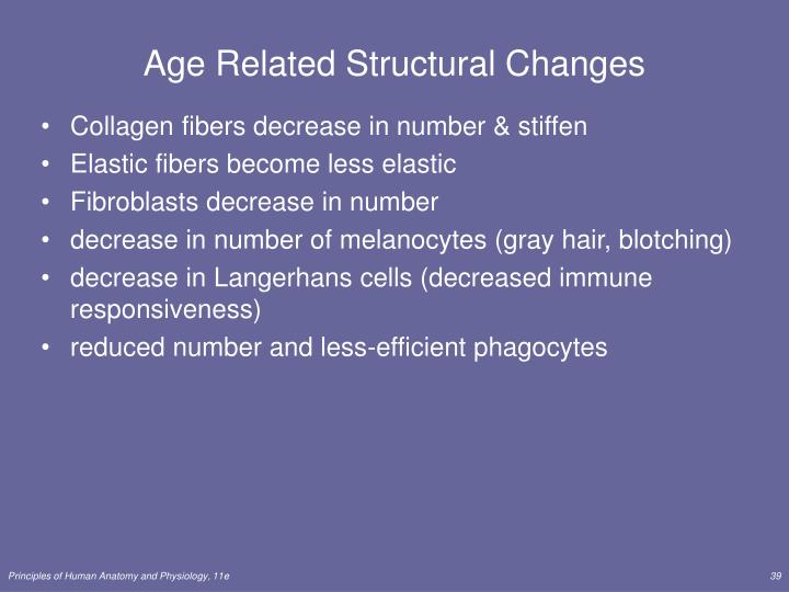 Age Related Structural Changes