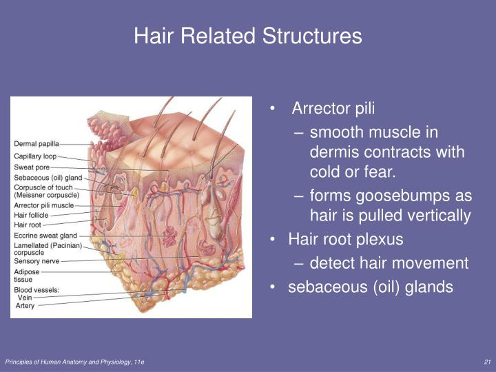 Hair Related Structures