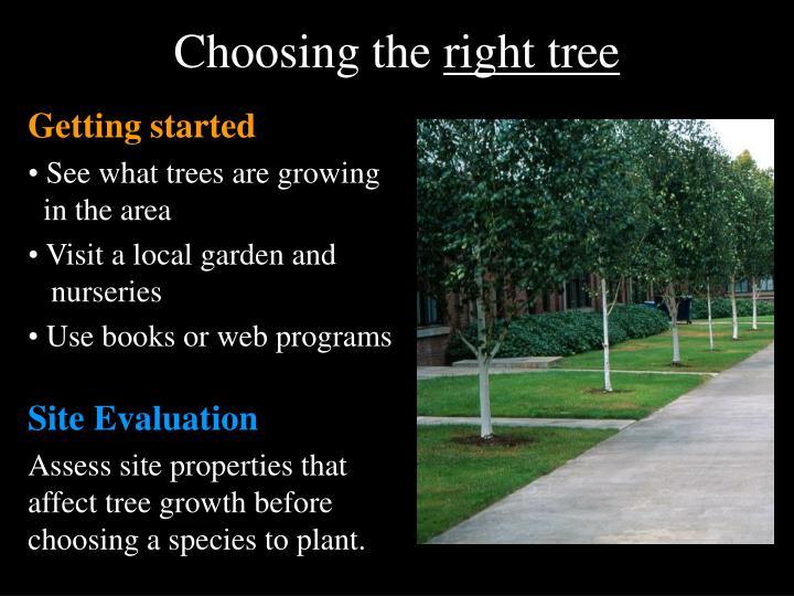 Choosing the right tree