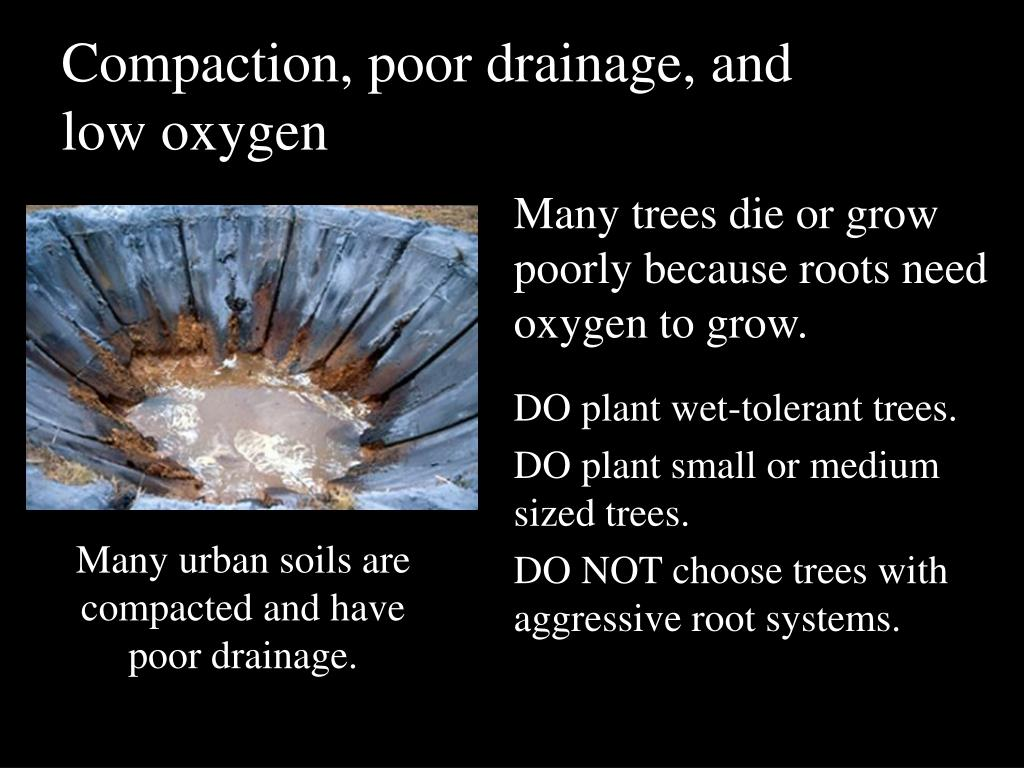 Compaction, poor drainage, and