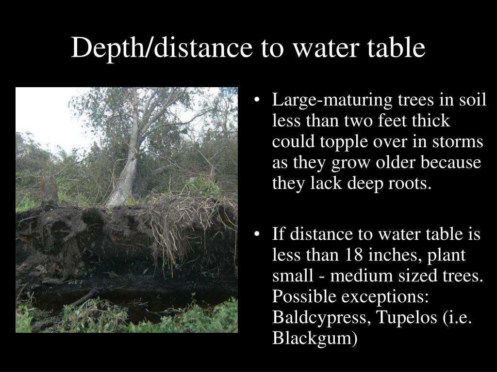 Depth/distance to water table