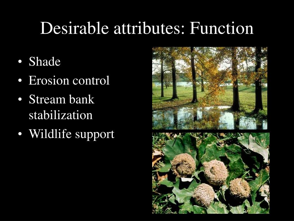 Desirable attributes: Function