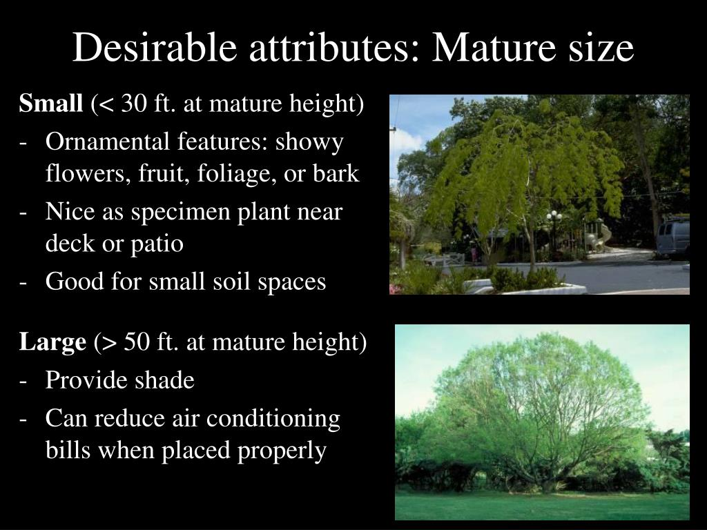 Desirable attributes: Mature size