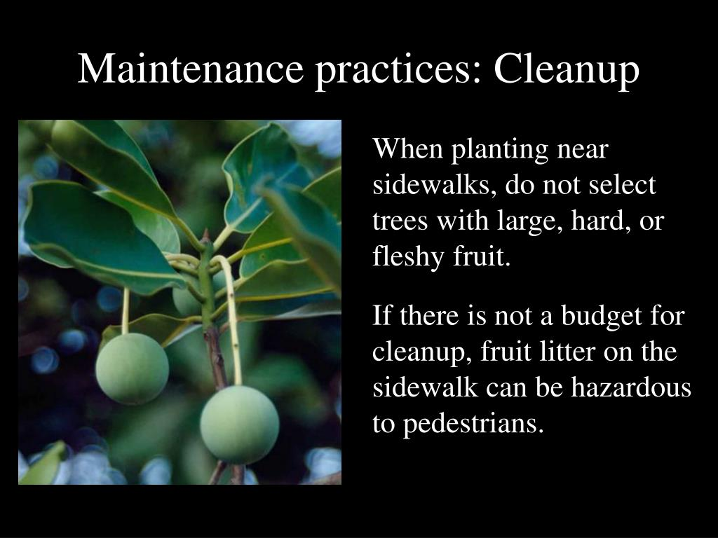 Maintenance practices: Cleanup