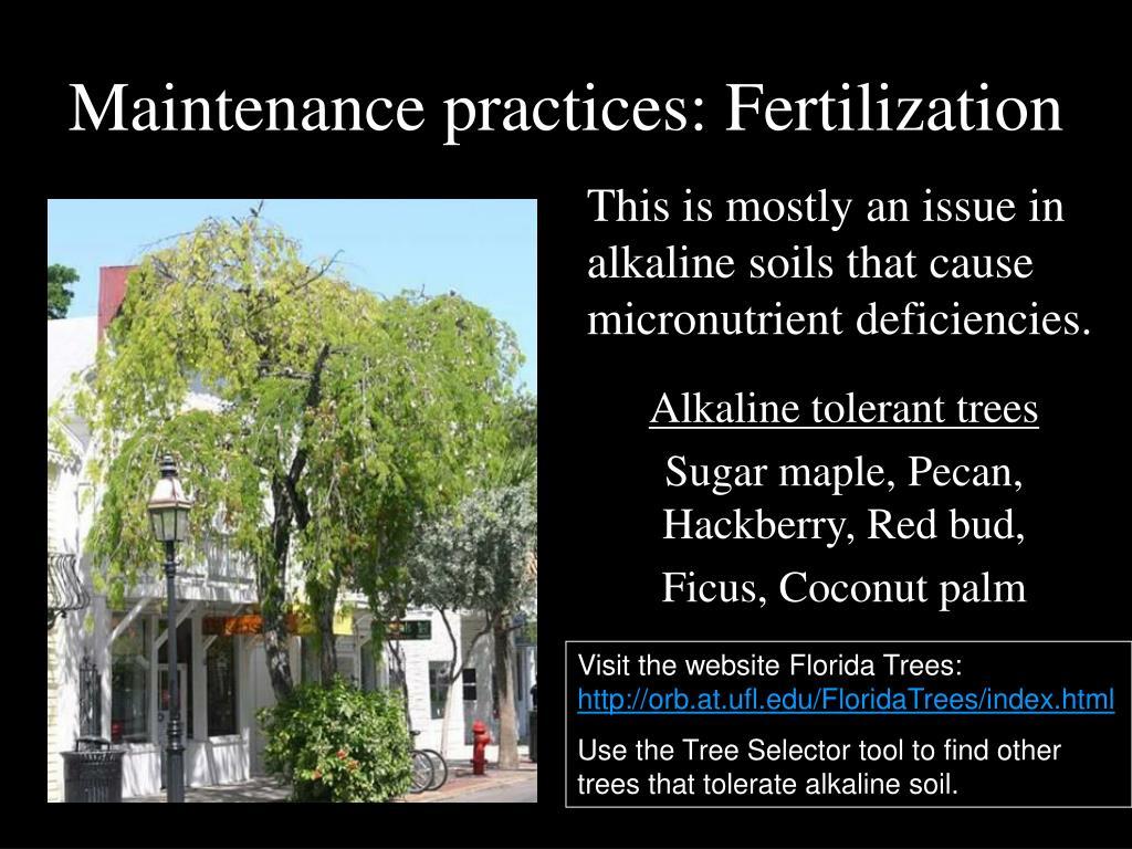 Maintenance practices: Fertilization