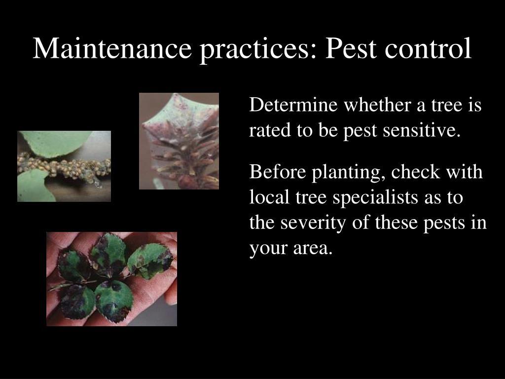 Maintenance practices: Pest control