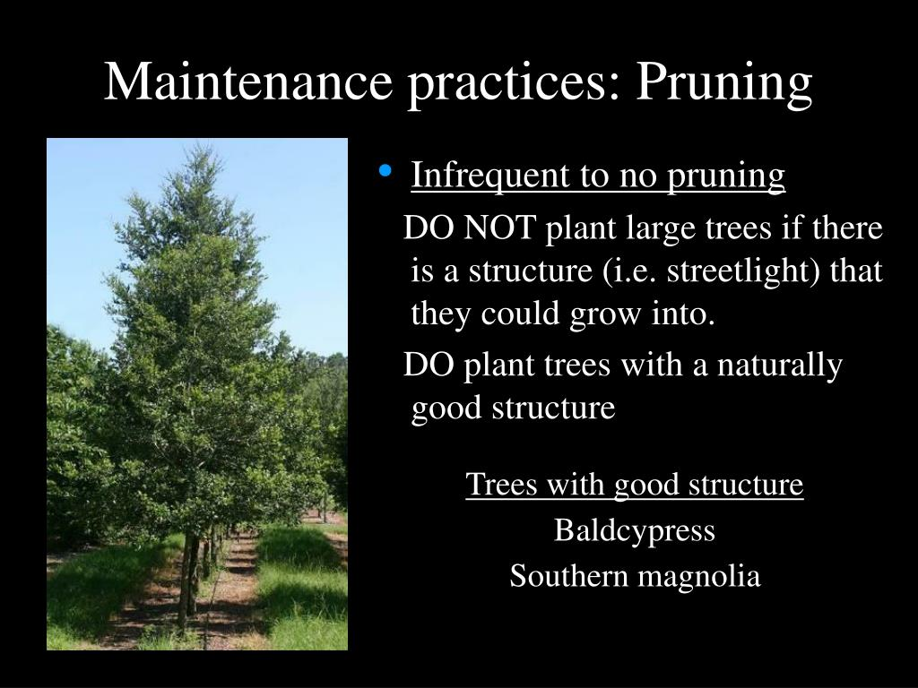 Maintenance practices: Pruning