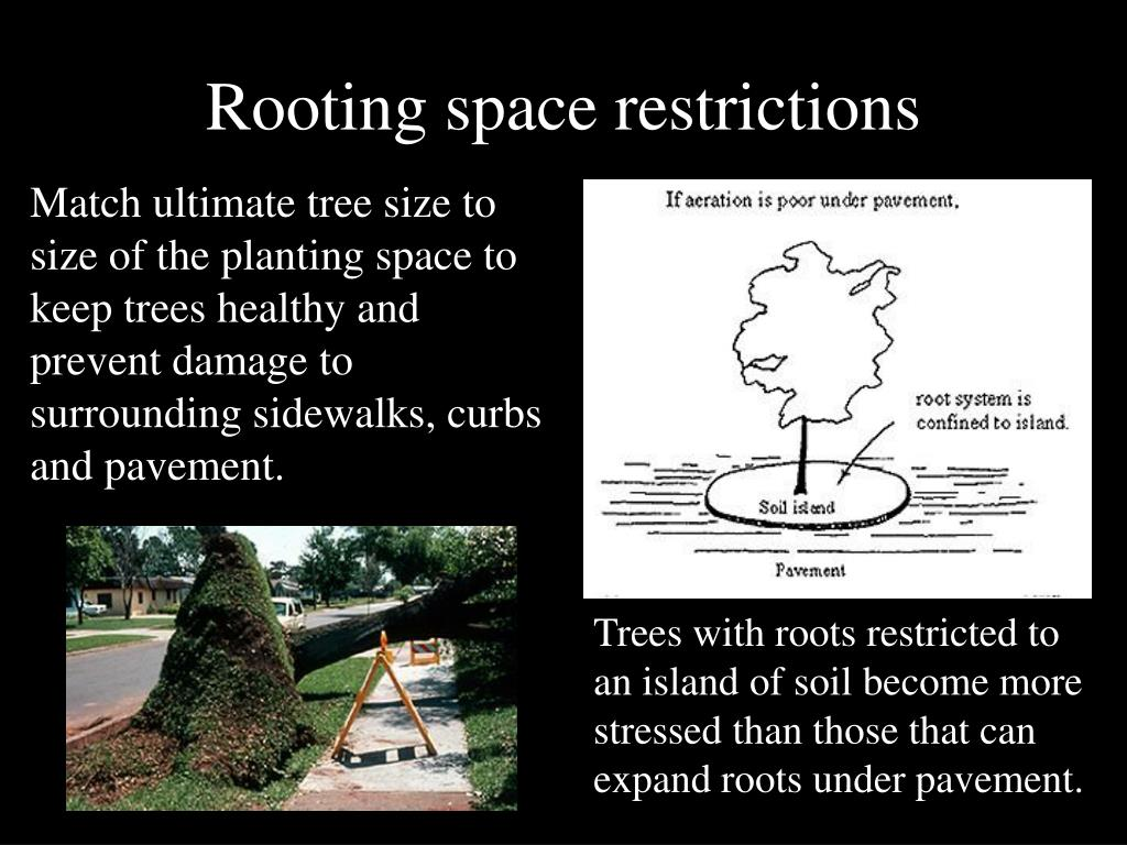 Rooting space restrictions