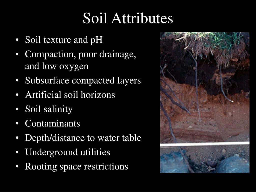 Soil Attributes