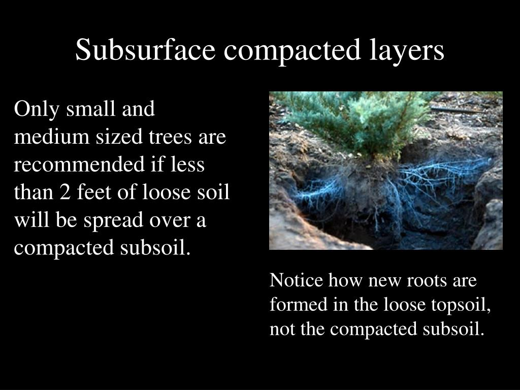 Subsurface compacted layers