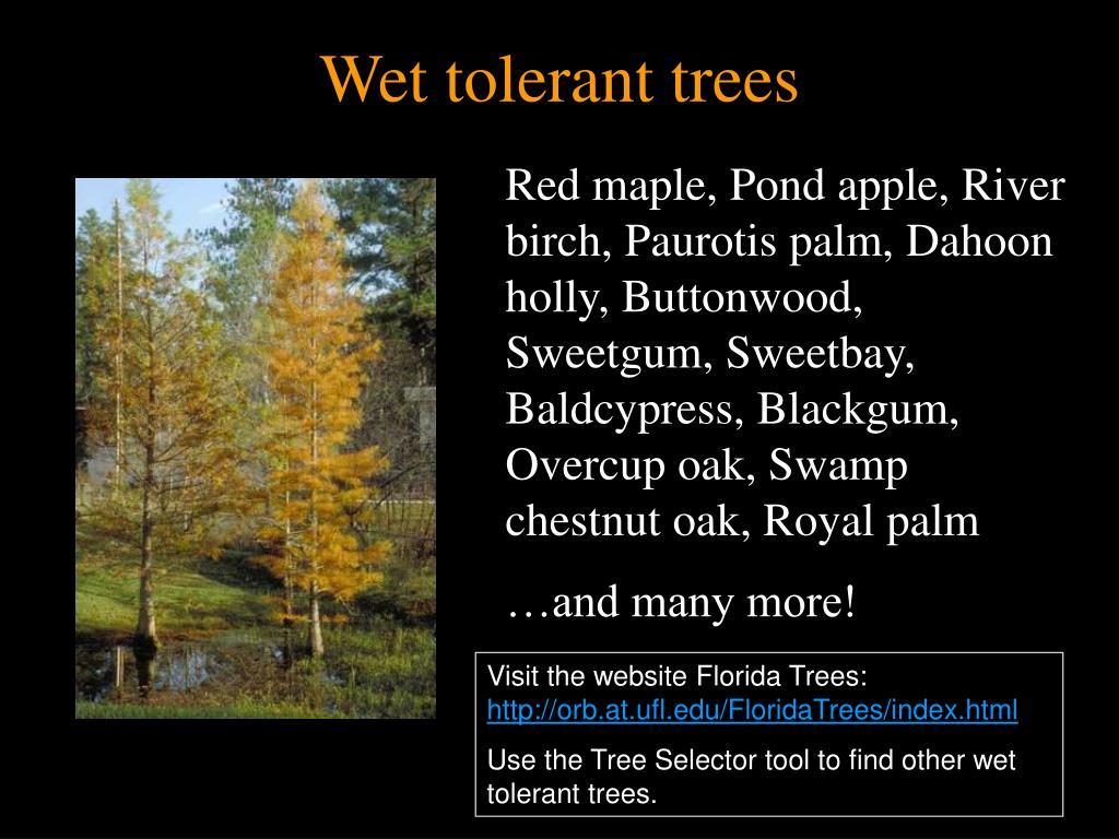 Wet tolerant trees