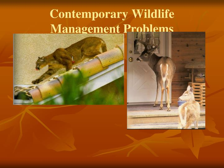Contemporary Wildlife Management Problems
