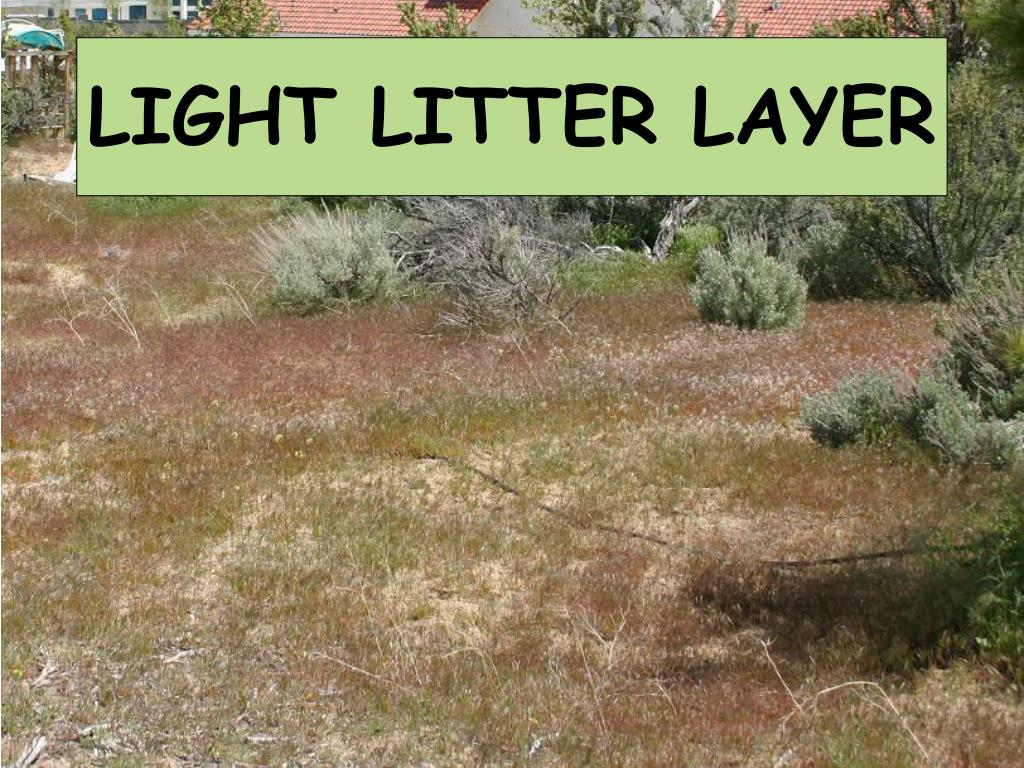 LIGHT LITTER LAYER