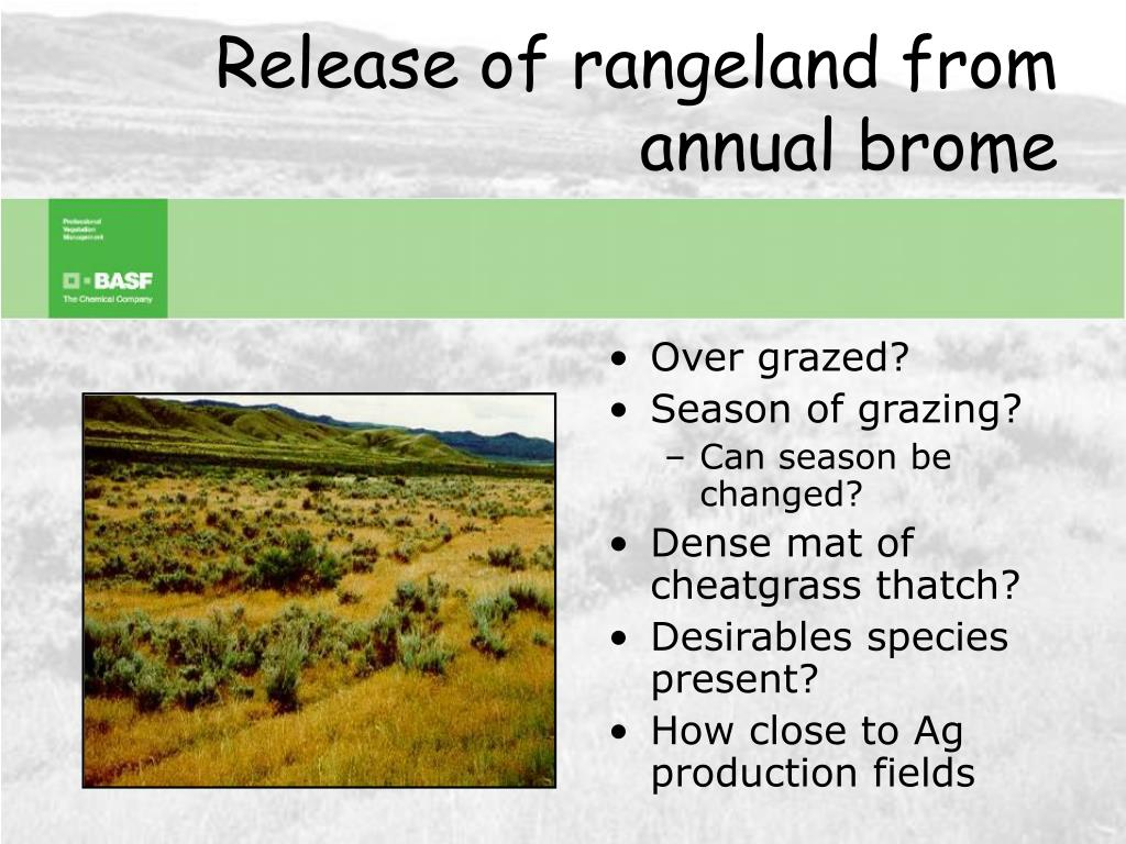Release of rangeland from