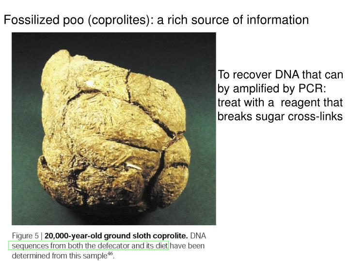 Fossilized poo (coprolites): a rich source of information
