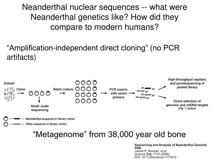 Neanderthal nuclear sequences -- what were Neanderthal genetics like? How did they compare to modern humans?