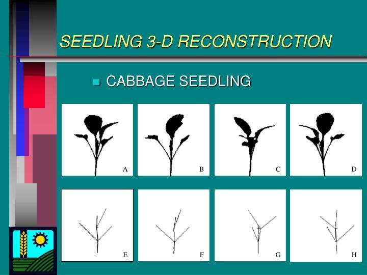 SEEDLING 3-D RECONSTRUCTION