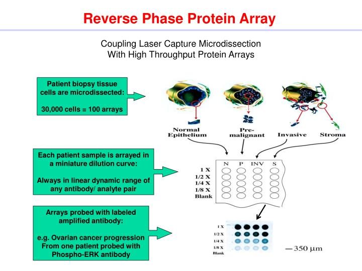 Reverse phase protein array