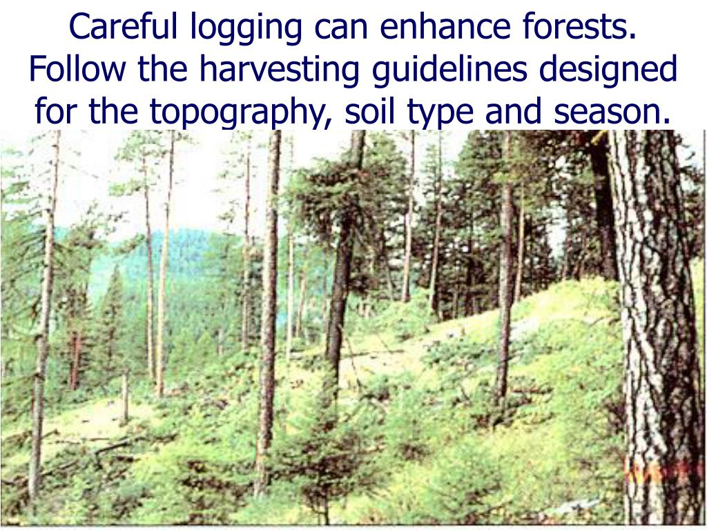 Careful logging can enhance forests.  Follow the harvesting guidelines designed for the topography, soil type and season.