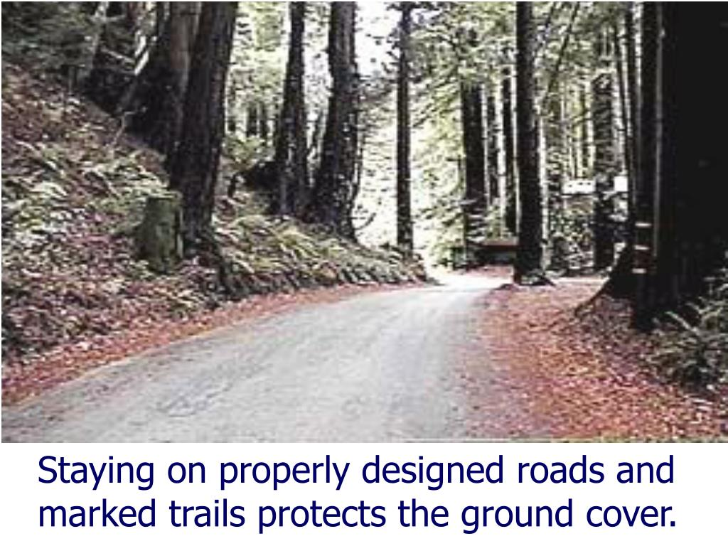 Staying on properly designed roads and marked trails protects the ground cover.