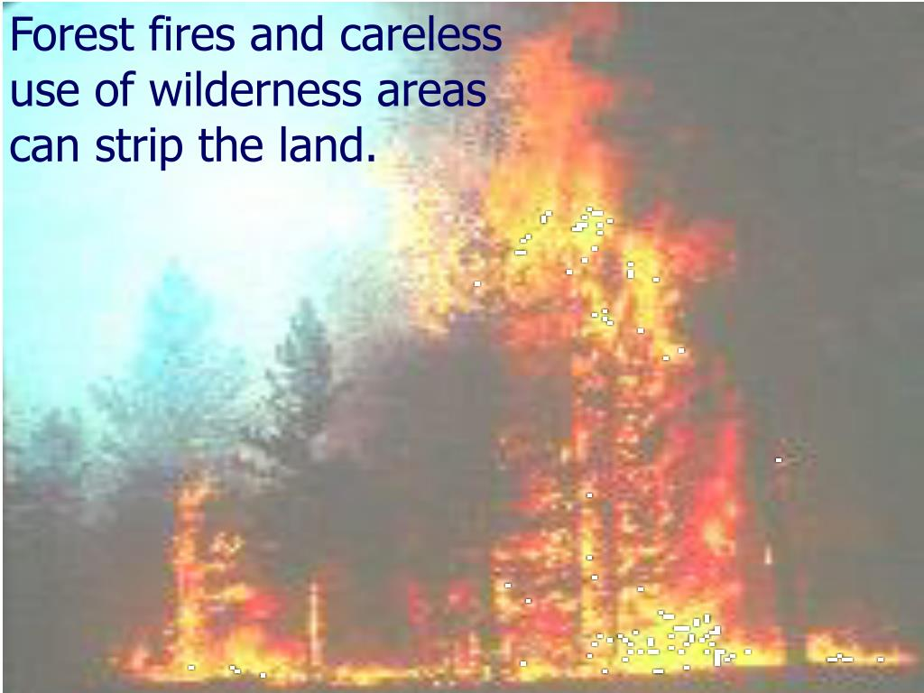 Forest fires and careless use of wilderness areas can strip the land.