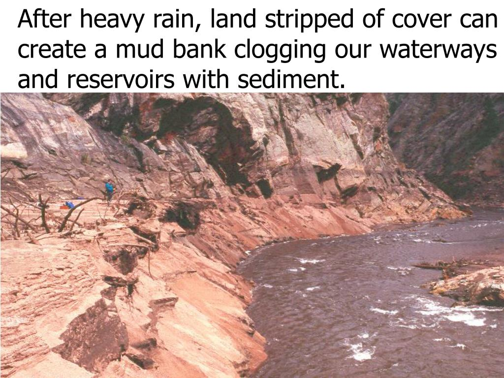 After heavy rain, land stripped of cover can create a mud bank clogging our waterways and reservoirs with sediment.