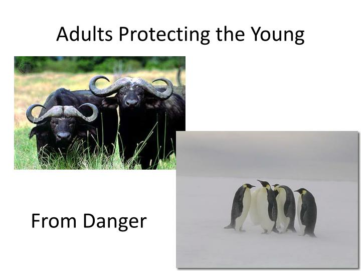 Adults Protecting the Young