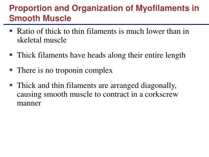 Proportion and Organization of Myofilaments in Smooth Muscle