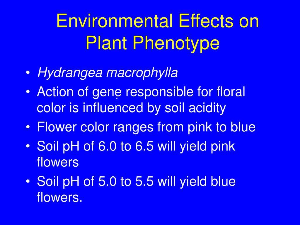 Environmental Effects on Plant Phenotype