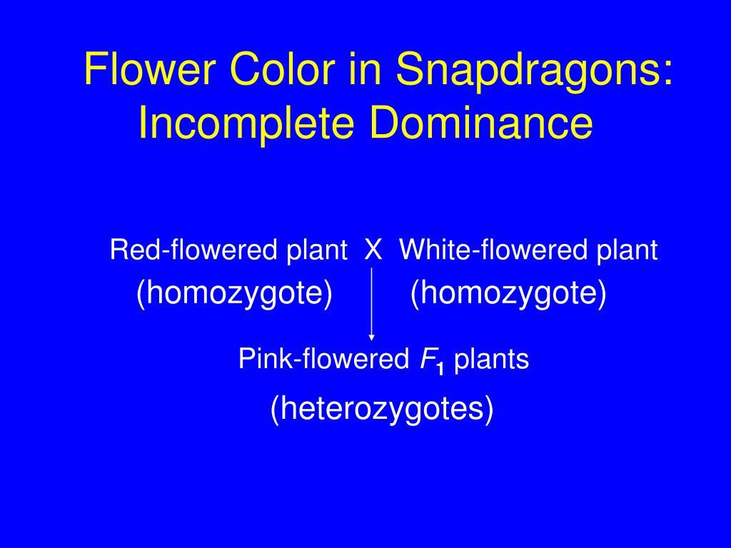 Flower Color in Snapdragons: Incomplete Dominance