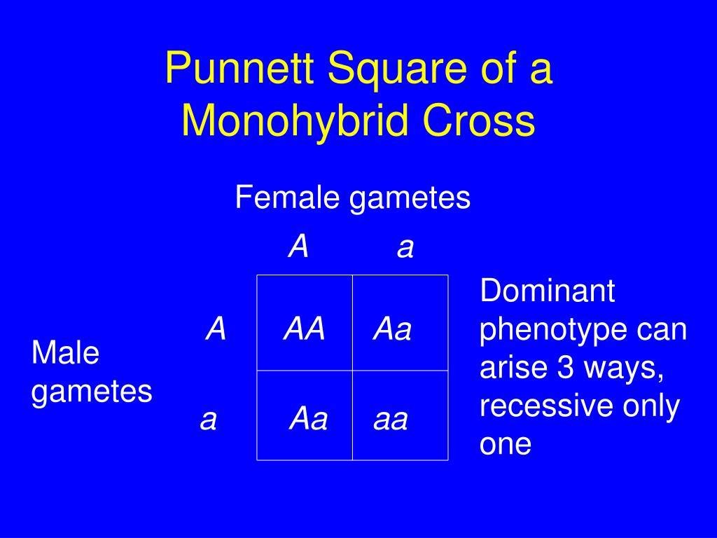 Female gametes