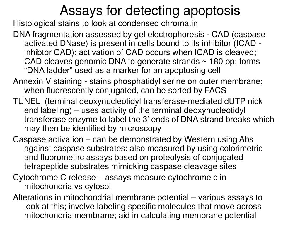 Assays for detecting apoptosis
