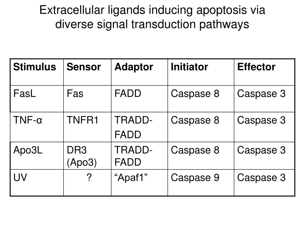 Extracellular ligands inducing apoptosis via diverse signal transduction pathways
