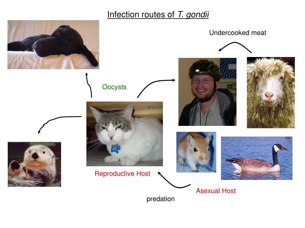 Infection routes of