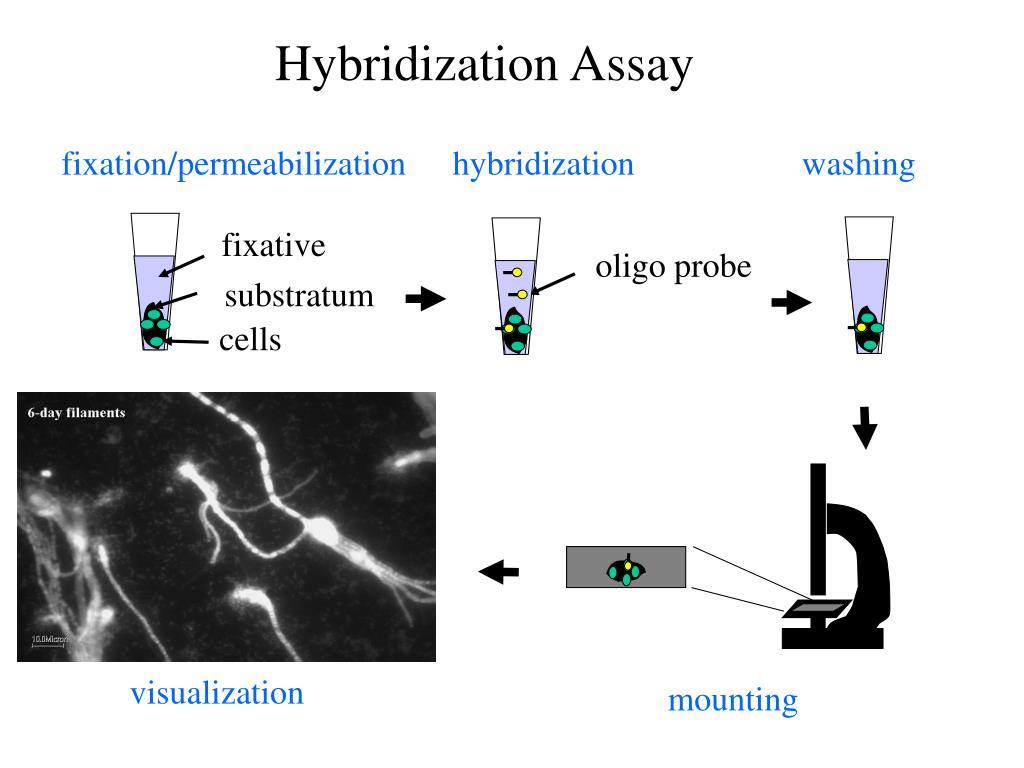 fixation/permeabilization