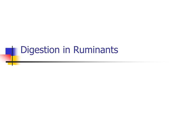 Digestion in ruminants