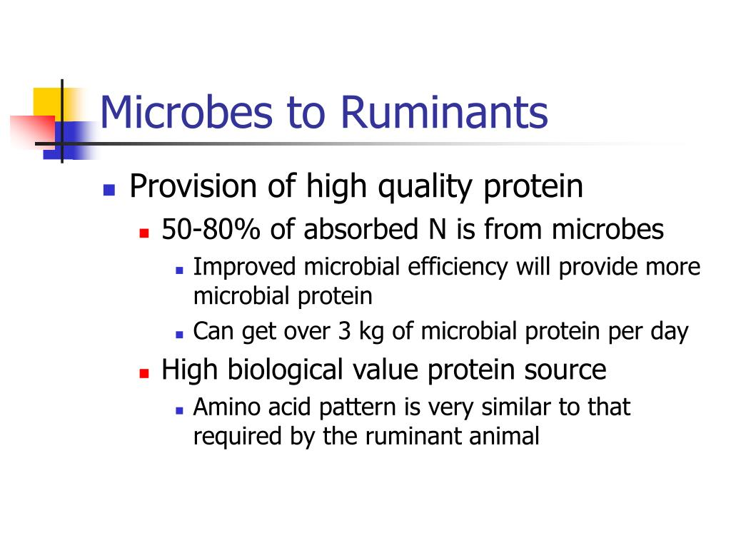 Microbes to Ruminants