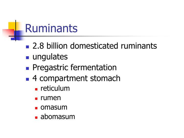 Ruminants