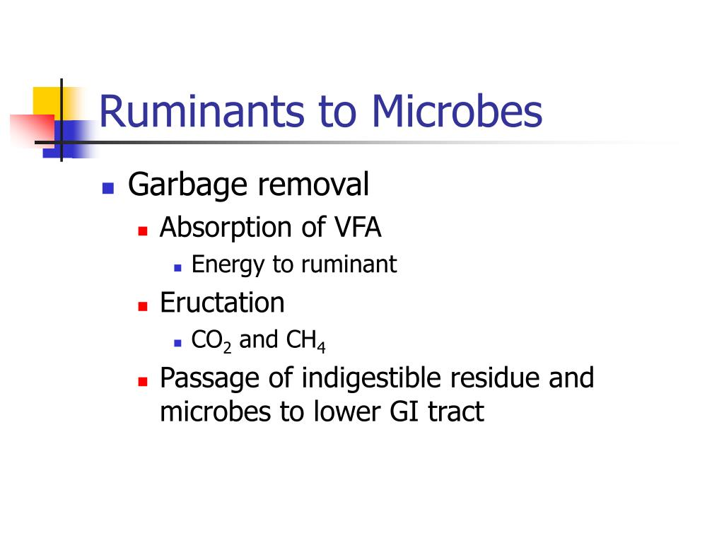 Ruminants to Microbes