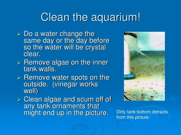 Clean the aquarium!