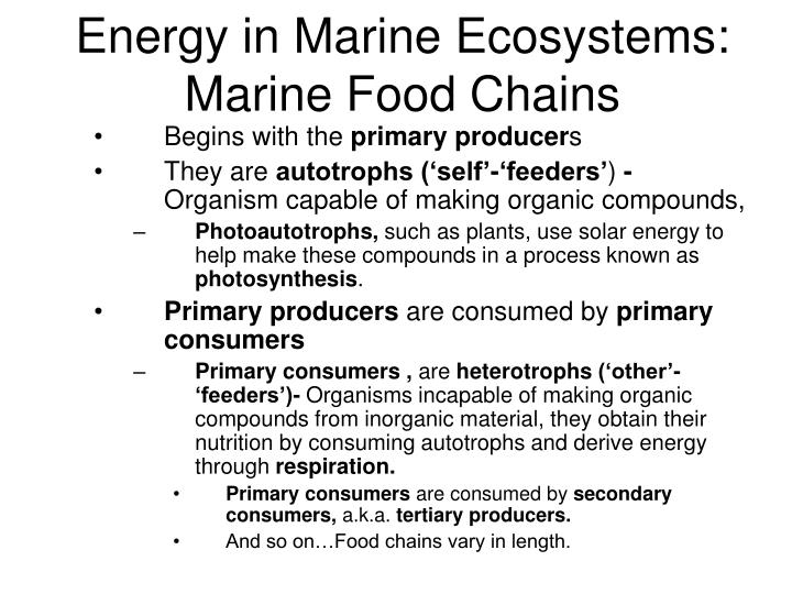 Energy in marine ecosystems marine food chains