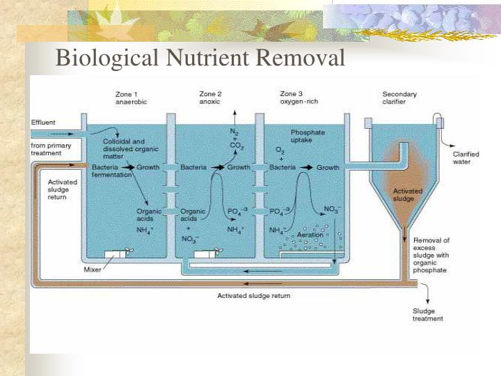 Biological Nutrient Removal
