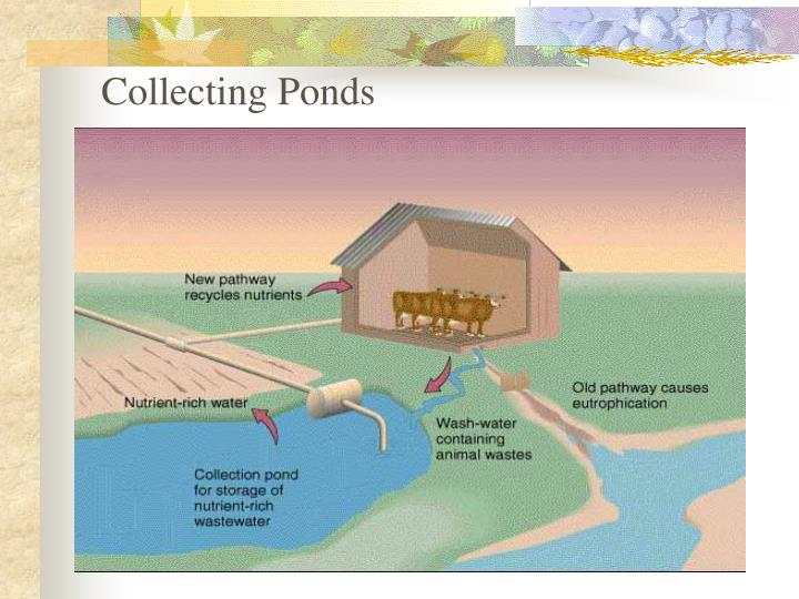 Collecting Ponds