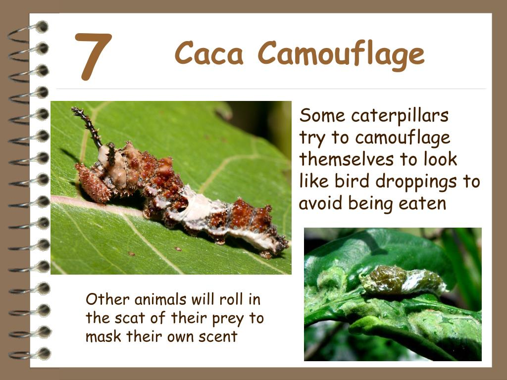 Caca Camouflage