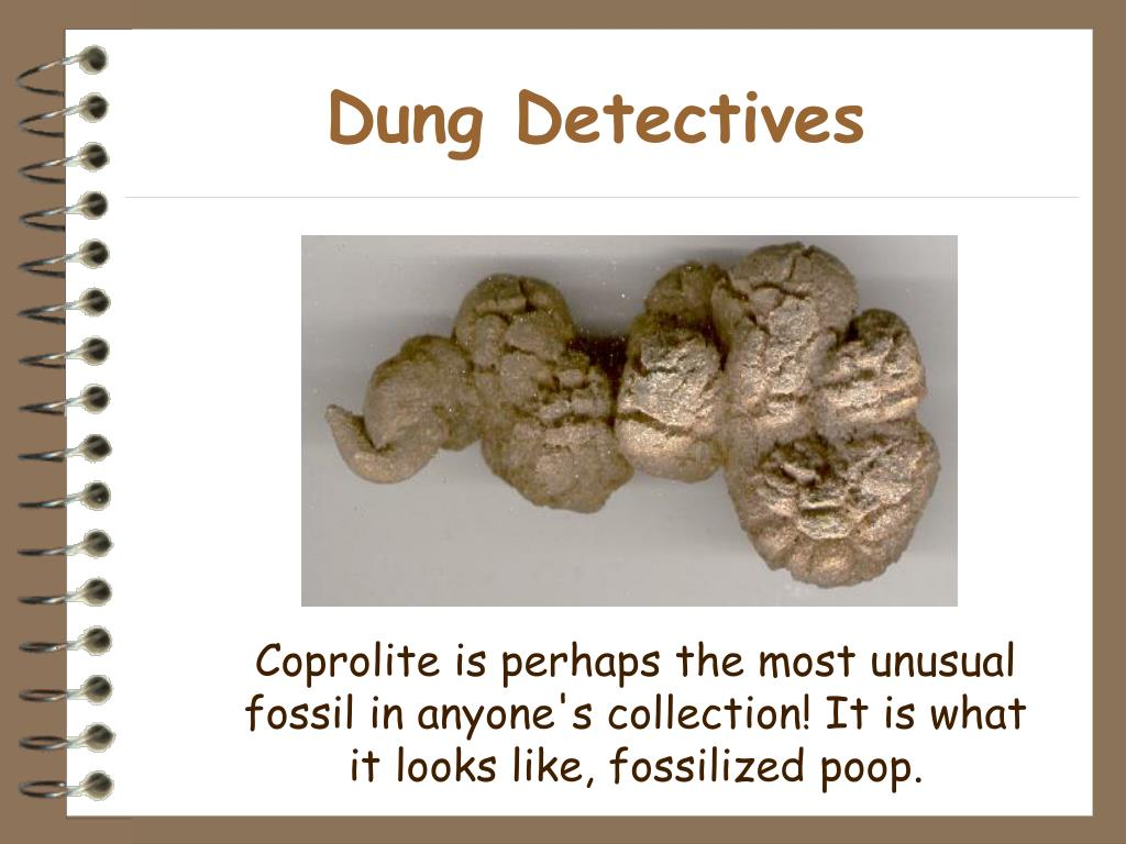 Dung Detectives