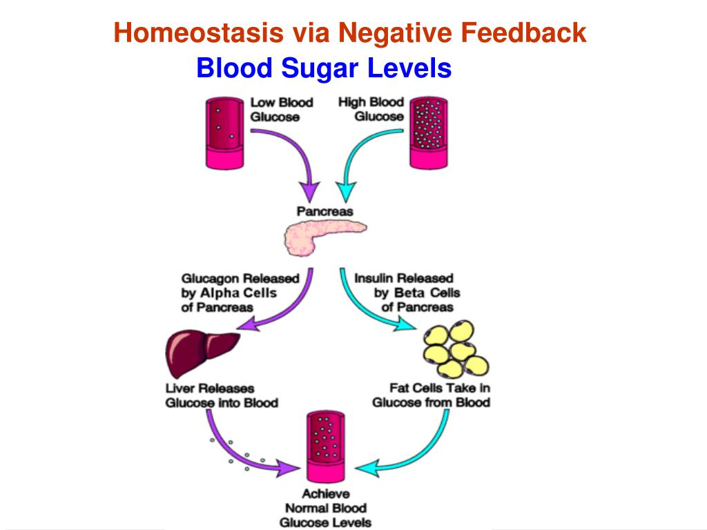 Homeostasis via Negative Feedback