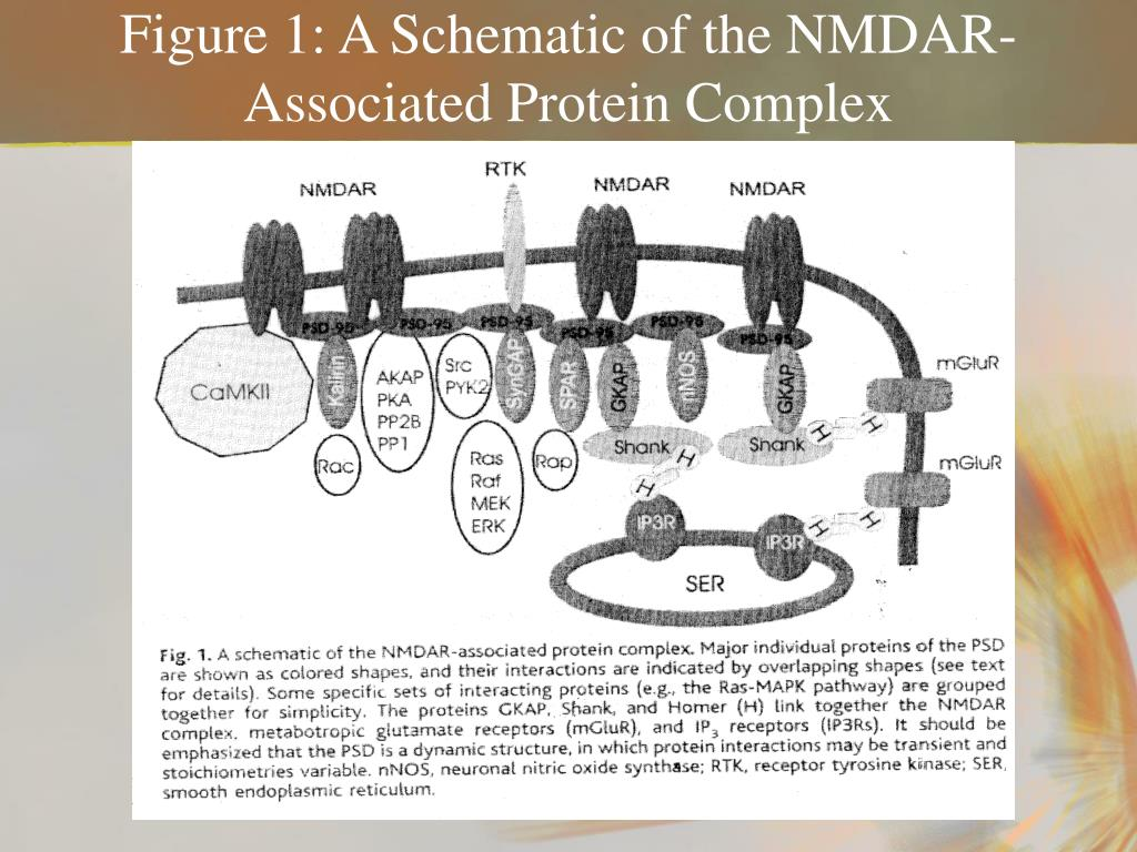 Figure 1: A Schematic of the NMDAR-Associated Protein Complex